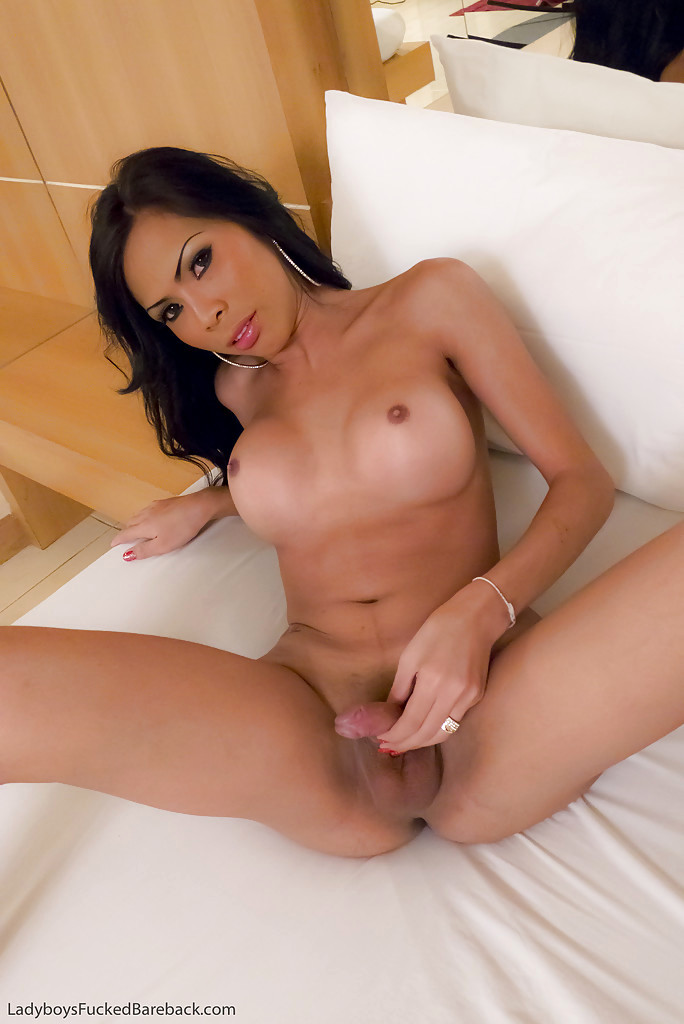Busty Massive Cock Asian T-Girl Gets Barebacked After Sucking Cock A Rough Tool