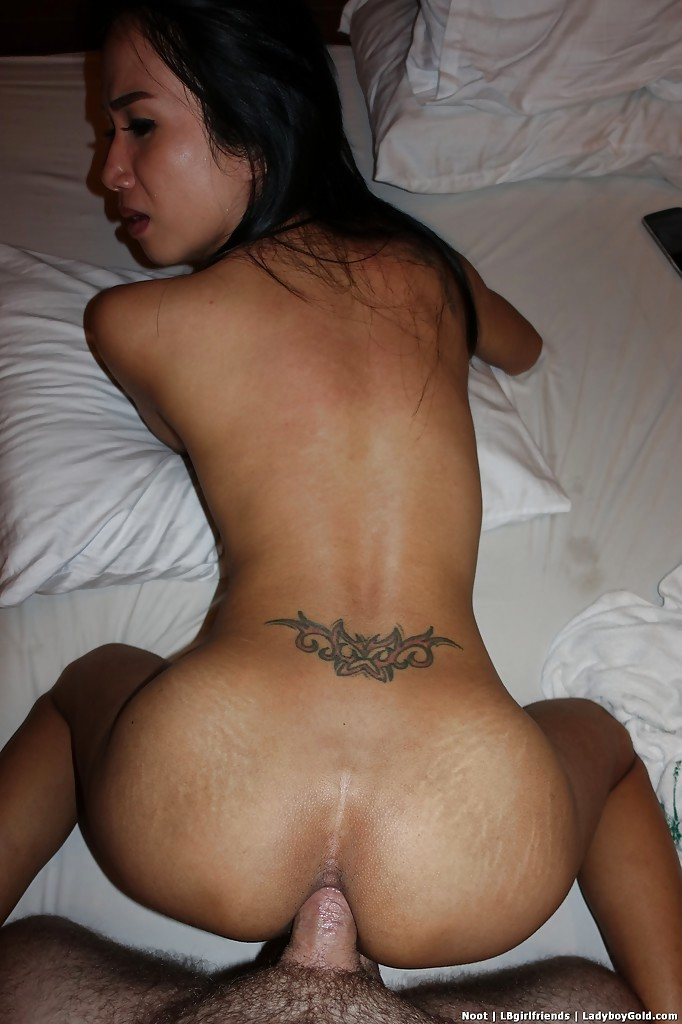 Tiny Tranny Whore Noot Taking Bare Back Ass-Hole Pounding In Motel Room